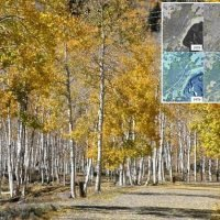 An 80,000-year-old forest in Utah is DYING