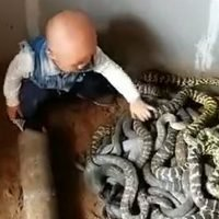 Daring toddler handles a nest of SNAKES before he can even talk