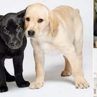 Inspiring diary of two puppies chosen to sniff out human diseases