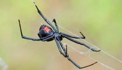 Mystery of how spiders create steel-strength silk is unravelled
