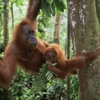 Wildlife populations plummeting in face of human activity, report…