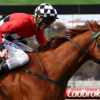 Controversy as stable error sees Fools scratched