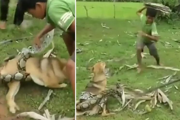 Dramatic moment kids fight off massive snake as it tries to kill their pet dog