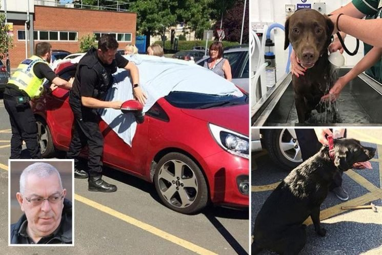 Man whose two Labradors almost roasted to death after he left them in car during heatwave banned from keeping dogs