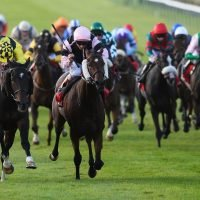 Cesarewitch runners and tips: Your top pinstickers' guide to Saturday's handicap race at Newmarket