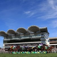 Free horse racing tips for today: Newmarket, York, Wolverhampton and Newton Abbot – Steve Mullen's betting preview for Friday, October 12