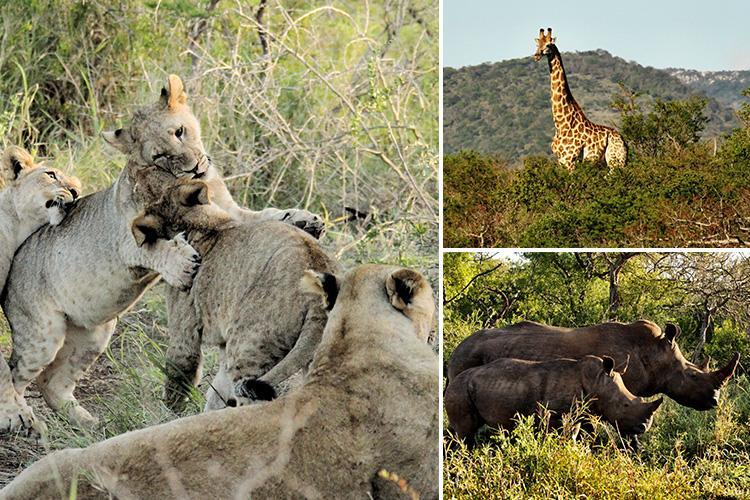 Treat yourself to a magical safari trip in South Africa's Thanda game reserve and catch a glimpse of exotic animals