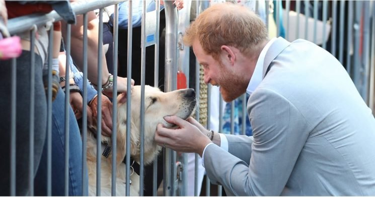 Prince Harry Was More Interested In Greeting Dogs Than People, But Who Can Blame Him?
