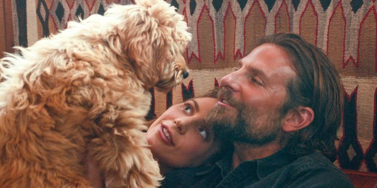 Bradley Cooper's Dog Is the Real Star of 'A Star Is Born'