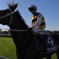 Race-by-race preview for Randwick on Saturday