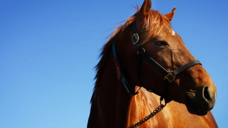 Horse causes panic after galloping through a bar in France