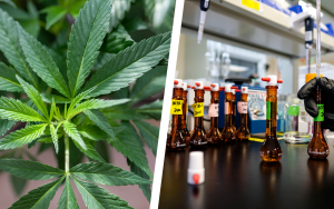 Here's Exactly How CBD Gets From Farm to Bottle