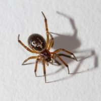 How to get rid of spiders in the house, treat spider bites and what to do if you're overwhelmed by creepy crawlies
