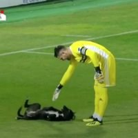 Dog Interrupts Professional Soccer Game to Demand Belly Rubs