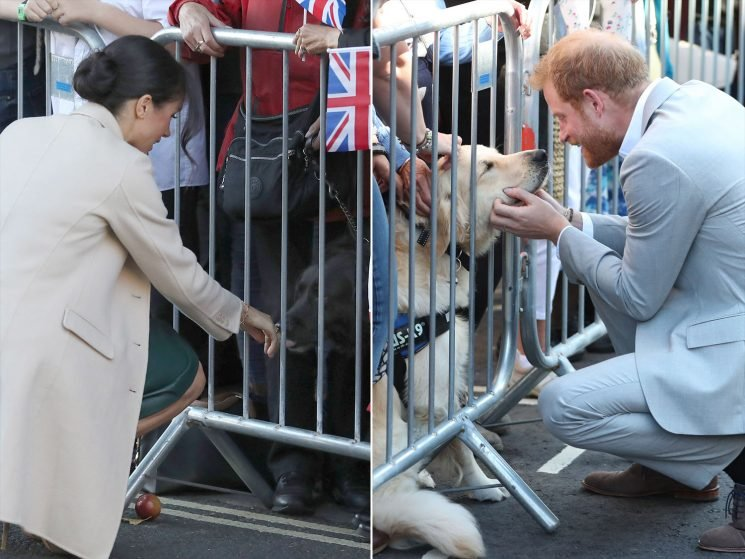 New Pup Parents Meghan Markle and Prince Harry Can't Help But Cuddle Some Dogs in Sussex