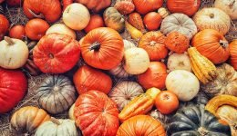 The Health Benefits of Eating Pumpkins