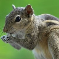 Support Squirrel Owner Gets Kicked Off Of Flight & Causes Police To Be Called