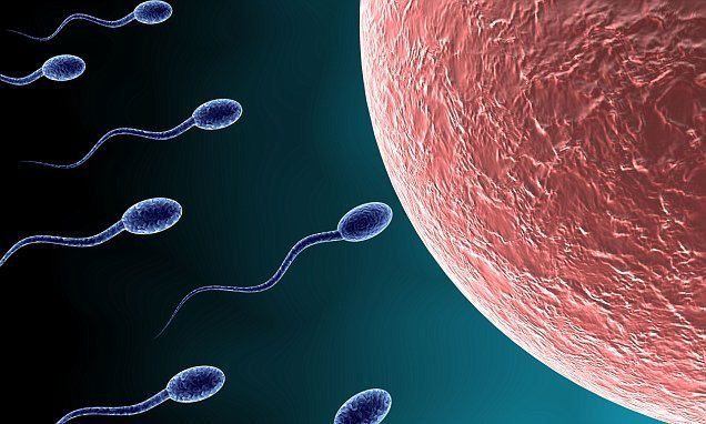 'Climate change could hit male fertility', research suggests