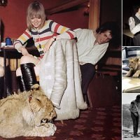 Unseen pictures of lion cub which was bought in Harrods in 1969