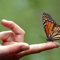 First monarch butterflies arrive at Mexico wintering area
