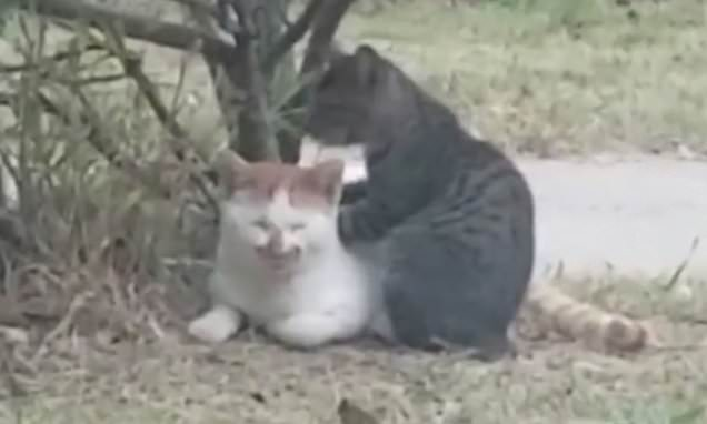 That hits the spot! Cat enjoys back massage given by its feline friend