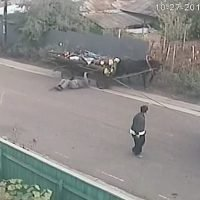 Bizarre video captures horse and cart crash spook man who's in a daze