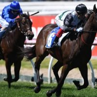 Five best bets for Melbourne Cup day