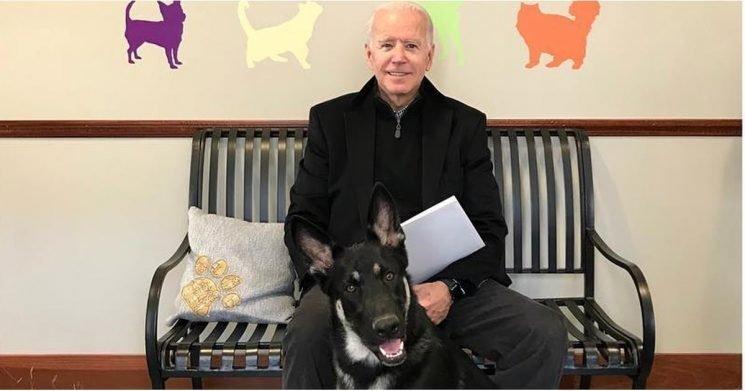 """Joe Biden Adopted His """"Dogg-leganger,"""" a German Shepherd Rescue Named Major"""