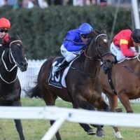 Race-by-race guide and tips for Canterbury Park on Friday