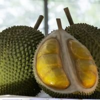 World's stinkiest fruit causes flight delay