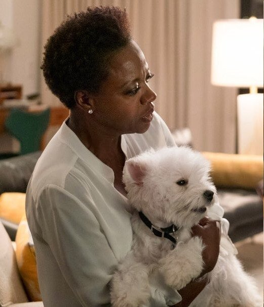 Olivia the Westie terrier deserves an Oscar nomination for her 'Widows' performance
