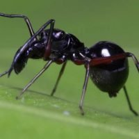 Meet the Spiders That Feed Milk to Their Young