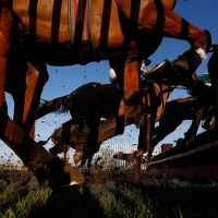 Best horse racing tips for today's action at Carlisle and Southwell from Tom Bull