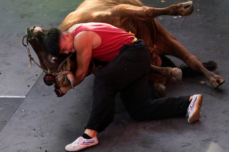 Inside the brutal world of Chinese bullfighting where competitors wrestle with giant beasts in deadly show of strength