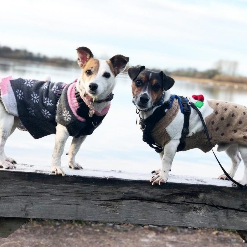 B&M is selling Christmas jumpers for dogs for £3 – and the pudding one is SO cute