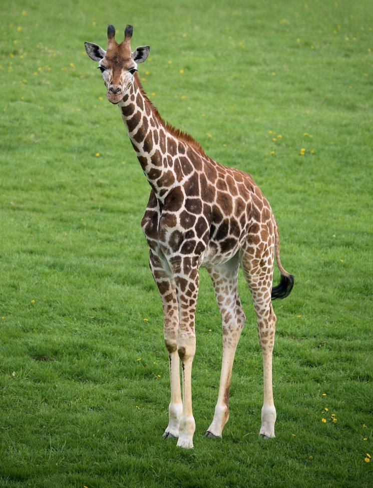 Baby Giraffe Dies at Columbus Zoo Following Complications During Its Highly-Anticipated Birth
