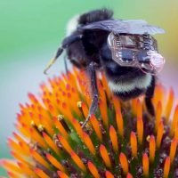 Bees can now sport tiny 'backpacks' in the name of science