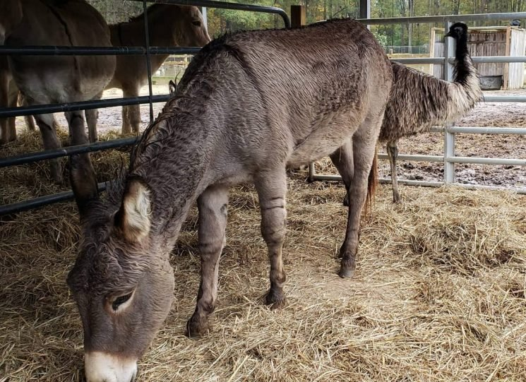 Jeffrey Dean Morgan adopted donkey and emu besties so they can stay together