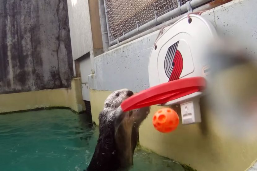Eddie, the Basketball-Playing Sea Otter and Viral Star, Dies at 20