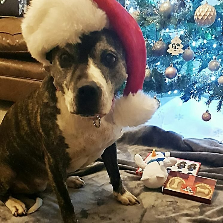 Dog finds home for holidays after 8 years in shelter