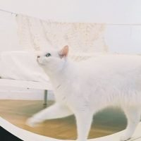 Korean firm debuts $1,800 smart treadmill for your cat at CES