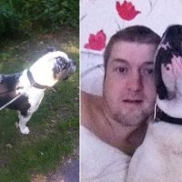 No jail time for dog owner who got his bullmastiff to attack neighbour