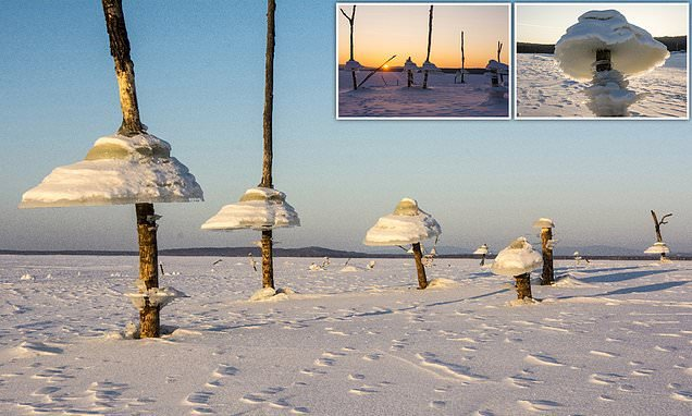 'Magic mushrooms' made from ICE appear on Russian reservoir