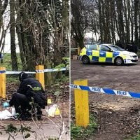 Police comb woodland in hunt for man wanted over sex attack on woman