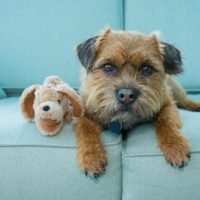 Researchers to probe why dogs form strong bonds with favorite toys