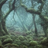 Amazing fairytale forest looks like scene from Lord of the Rings but it's real and in the UK