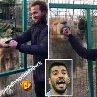 Harry Kane feeds a lion as Spurs ace tops Barcelona shortlist to replace Suarez