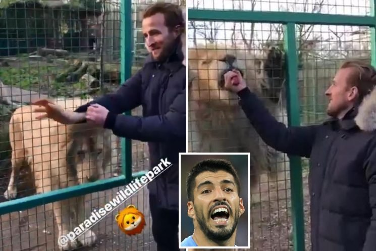 Harry Kane feeds a lion as Spurs ace tops Barcelona shortlist to replace Suarez