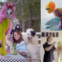 Inside the controversial, colorful world of 'creative' dog grooming