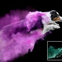 Pets look like superheroes as they fly through colourful paint